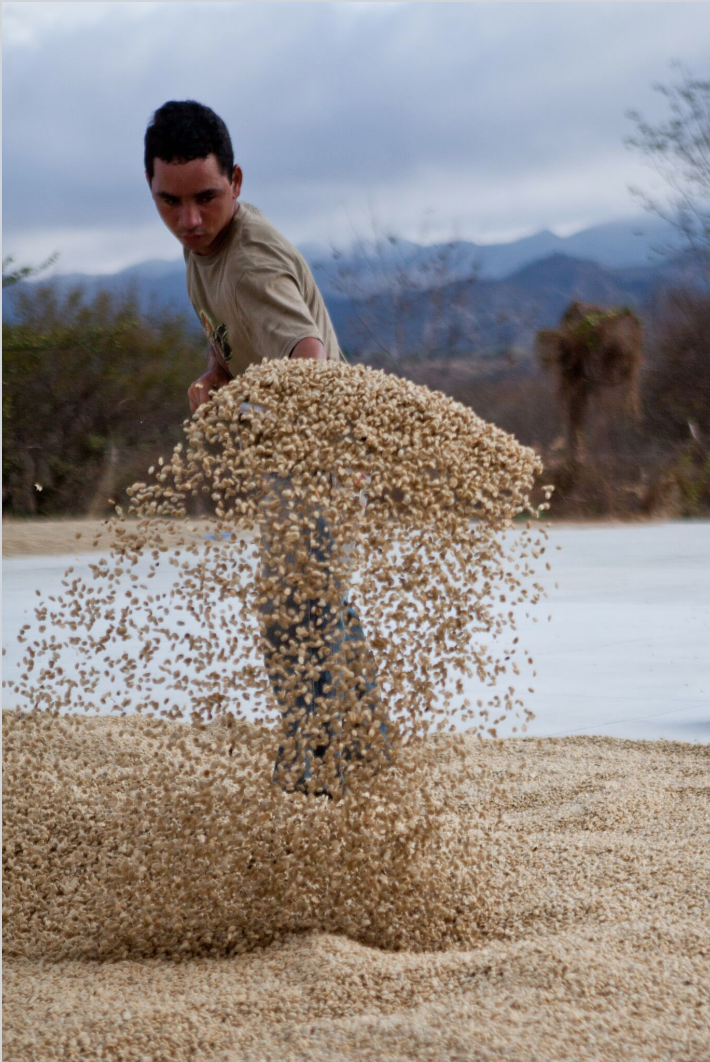 Screenshot bean drying